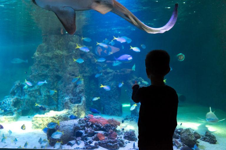 aquarium-wilhelmshaven-urzeit-slider-2
