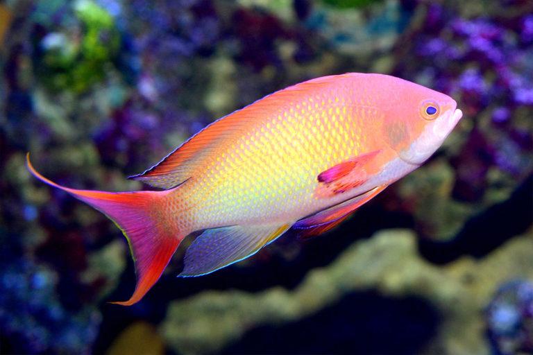 aquarium-wilhelmshaven-neu-fahnenbarsch