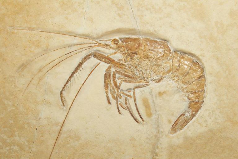aquarium-wilhelmshaven-neu-fossil-garnele