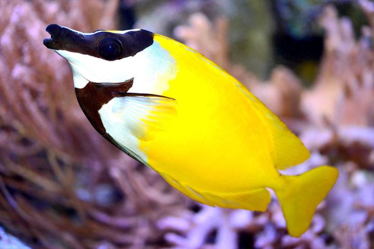 aquarium-wilhelmshaven-neu-fuchsgesicht