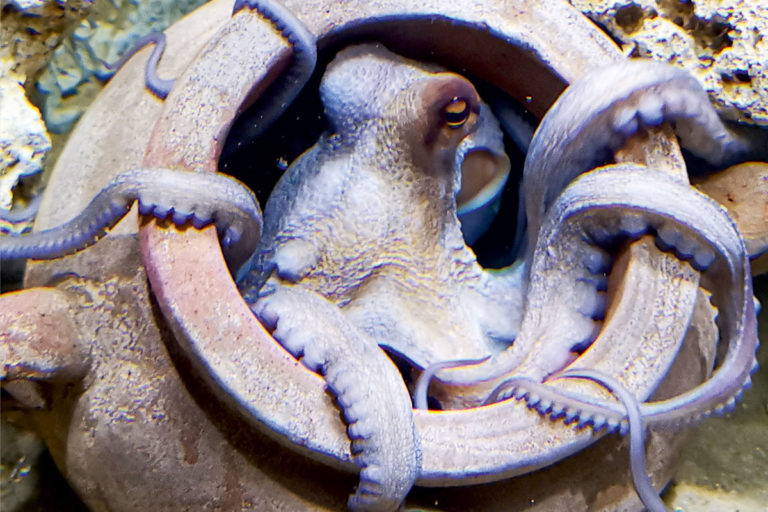 aquarium-wilhelmshaven-neu-krake-in-amopore